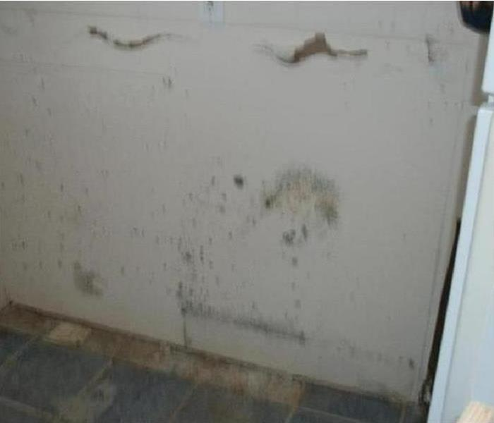 Vacation Disaster After Mold Damage Before