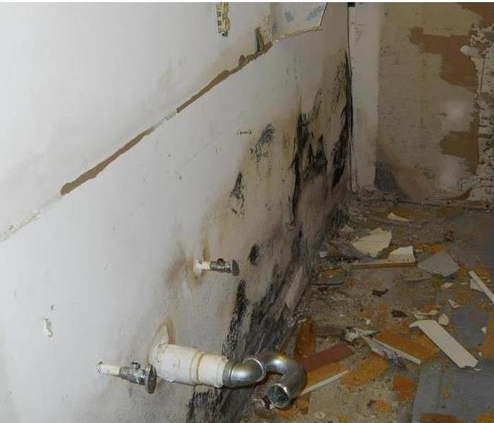 Mold Remediation How Much Does Damage Cost To Fix